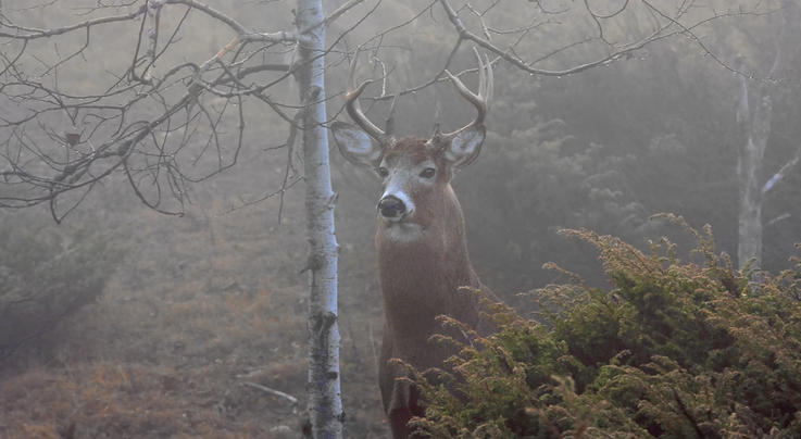 2019 Whitetail Report: New Antlered Buck Harvest Statistics Preview Image