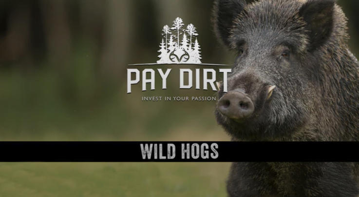 Pay Dirt: How to Trap Hogs Preview Image