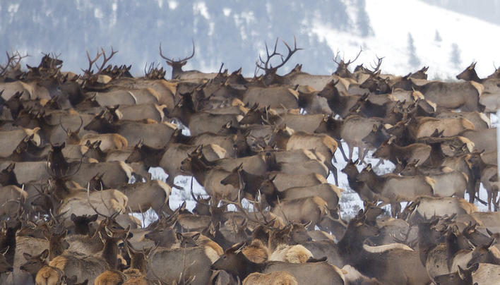 8 Tips for Better Big Game Hunting Preview Image