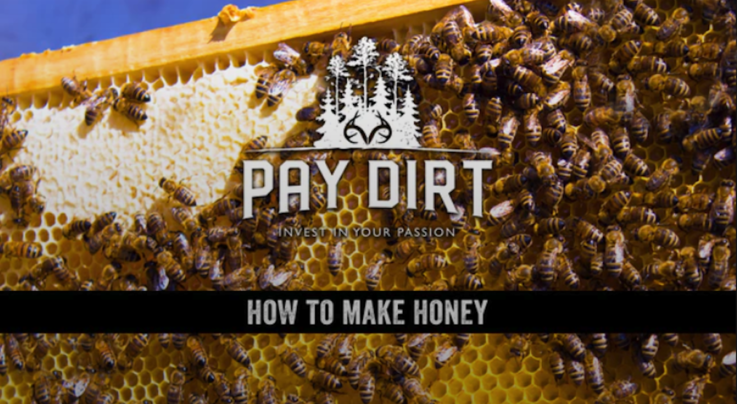 Pay Dirt: How to Make Honey Preview Image