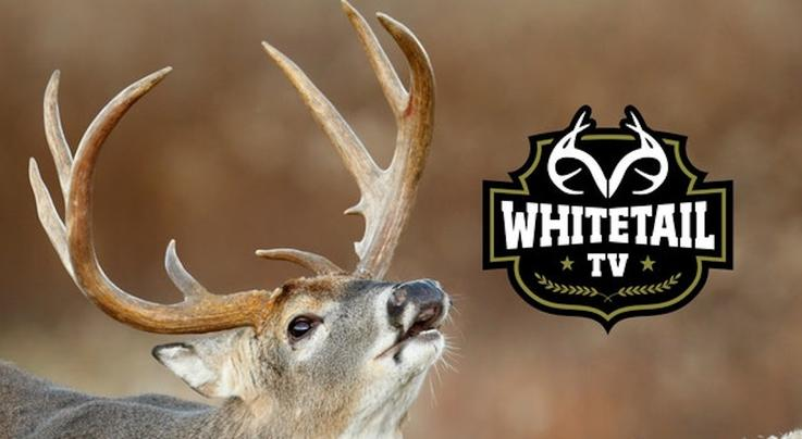 Whitetail TV: Season Prep, Friendly Banter and Albino Deer Preview Image