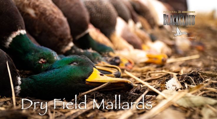 Realtree 365: Green-Timber Ducks, South Dakota Throwback Preview Image