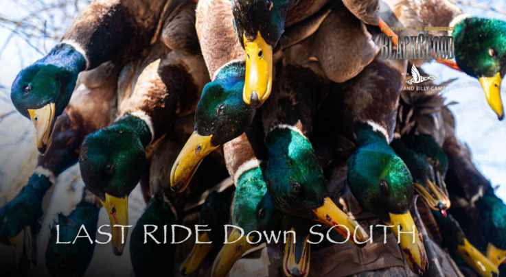 Realtree 365: Finishing Strong on Ducks in the South Preview Image