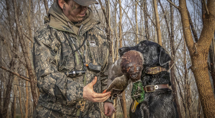Video: Atlantic Flyway Mallards — What You Need to Know Preview Image