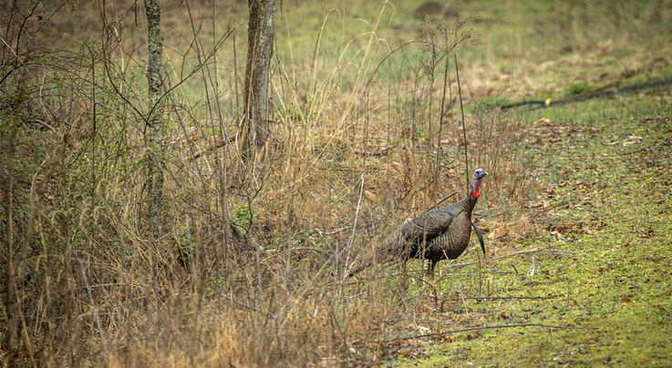 10 Ways to Read a Turkey Preview Image