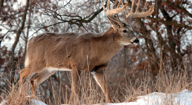 Did Your Buck Live? Preview Image