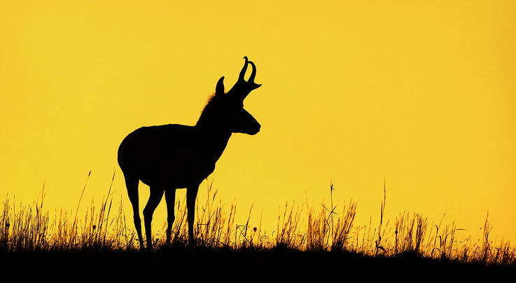 How to Plan Your First Antelope Hunt Preview Image