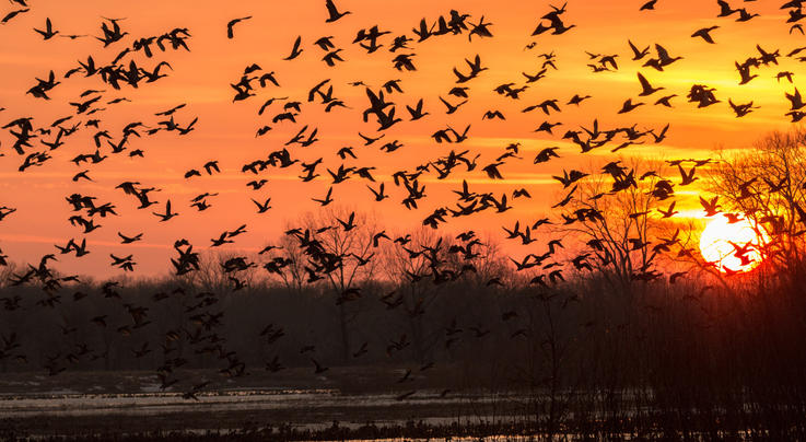 Delta Waterfowl Forecasts a Strong Fall Duck Flight Preview Image