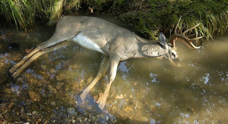What's the Word on EHD This Deer Season?  Preview Image