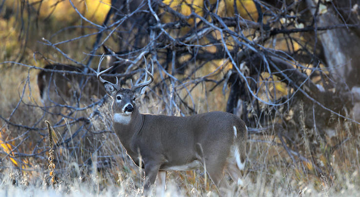 Why Windy Days are Great for Deer Hunting Preview Image