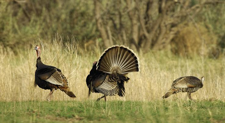 10 Dumb Turkey Hunting Mistakes Preview Image