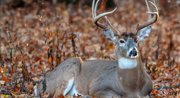 How to Hunt Big Buck Bedding Areas Preview Image