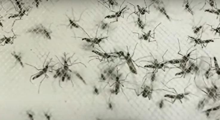 Michigan Citizens Warned About Deadly Mosquito-Borne Virus Preview Image