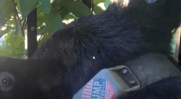 Someone Put a Trump Sticker on a Bear Preview Image