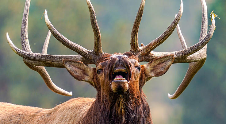 Muzzleloader Hunter Facing Felony Charges After Killing Bowhunter in Elk Hunting Incident Preview Image
