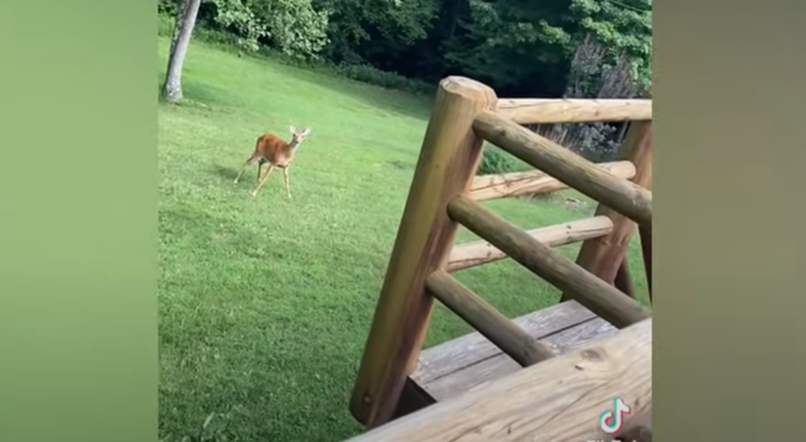 Watch: Doe Comes Running When She Hears Human Baby's Cries Preview Image