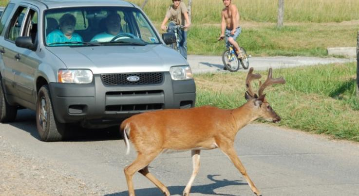 Syracuse Begins Second Year of Deer Management Program  Preview Image
