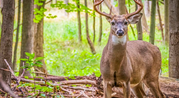 The 2021 Southeast Deer Hunting Forecast Preview Image