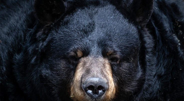 Bear Bites Alaskan Woman's Bottom in Backcountry Outhouse Preview Image