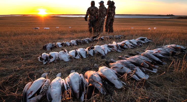 How To Choose the Right Snow Goose Outfitter Preview Image