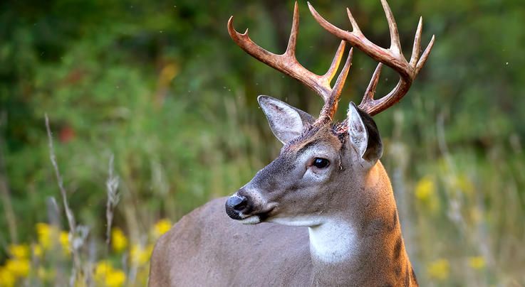 How and Where Big Bucks Move in September Preview Image