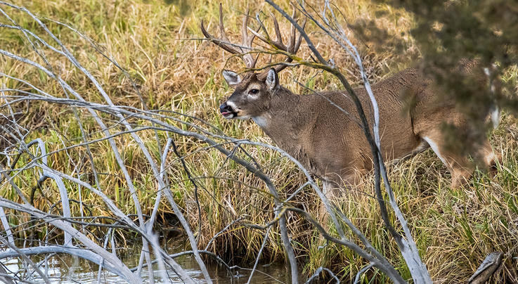 5 Best Stand Setups for Pre-Rut Bowhunting Preview Image