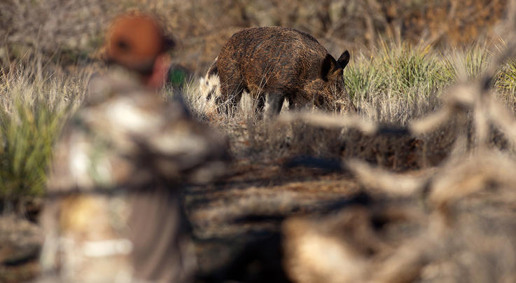 5 Best States for Pig Hunting Preview Image