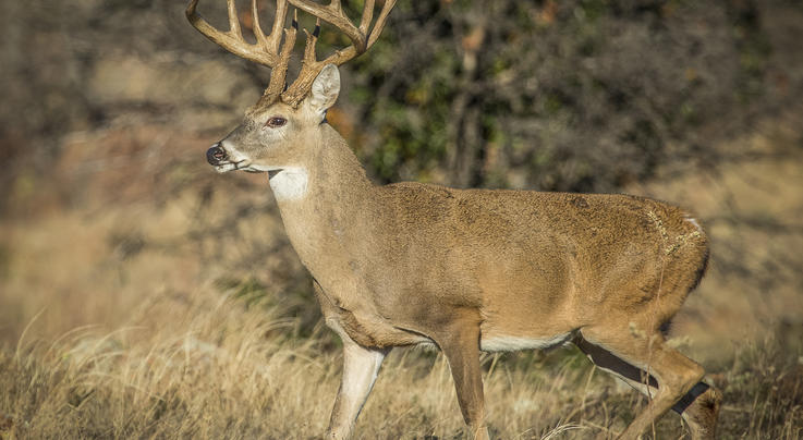 The 2021 Northeast Deer Hunting Forecast Preview Image