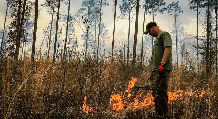 What to Know About Your First Controlled Burn  Preview Image