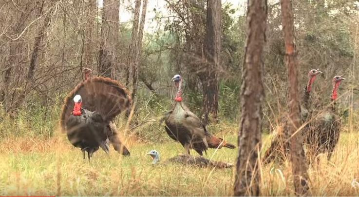 Video: 26 Turkey Kills in Two Minutes Preview Image
