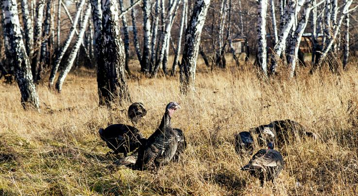 3 Ways to Salvage Your Fall Turkey Hunting Season Preview Image