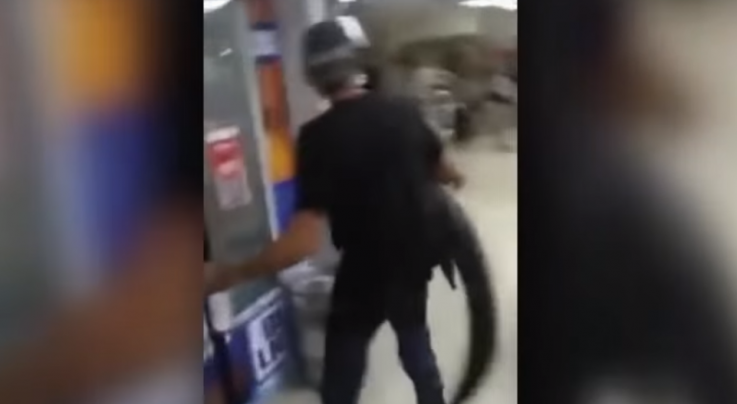Drunk Florida Man Chases Convenience Store Customer with Alligator Preview Image
