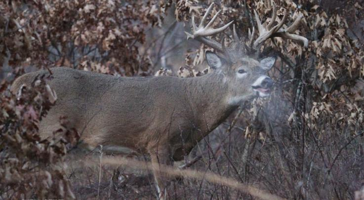 Busted: 5 Things You Don't Know About Deer Senses Preview Image