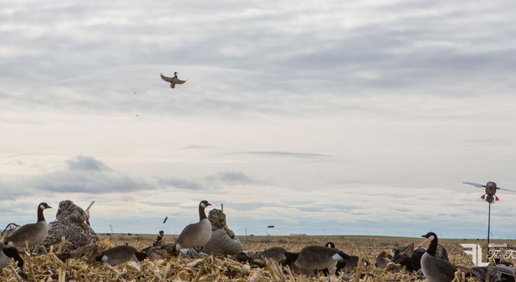 How to Hunt Ducks and Geese in Fields Preview Image