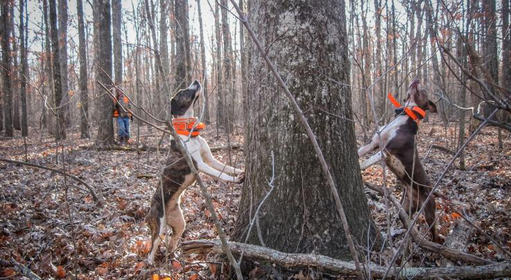 How to Hunt Squirrels with a Dog Preview Image