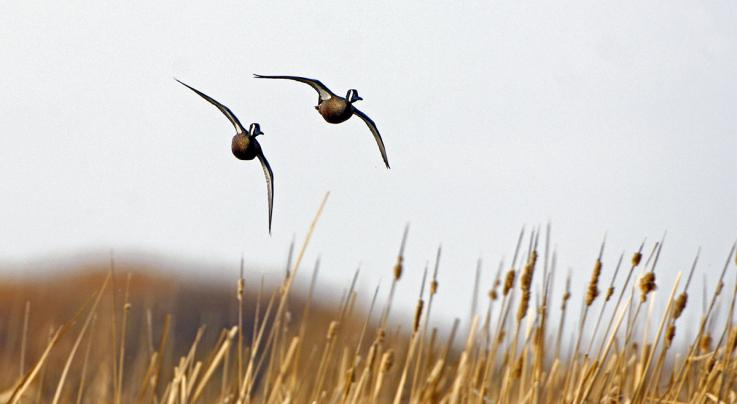 Hunting September Teal Preview Image