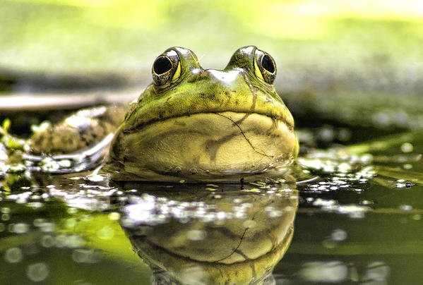 All About Froggin' Preview Image