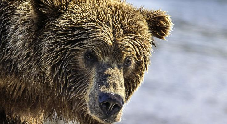 Retired Game Warden Larry Case Blogs on Big Guns for Bad Bears Preview Image