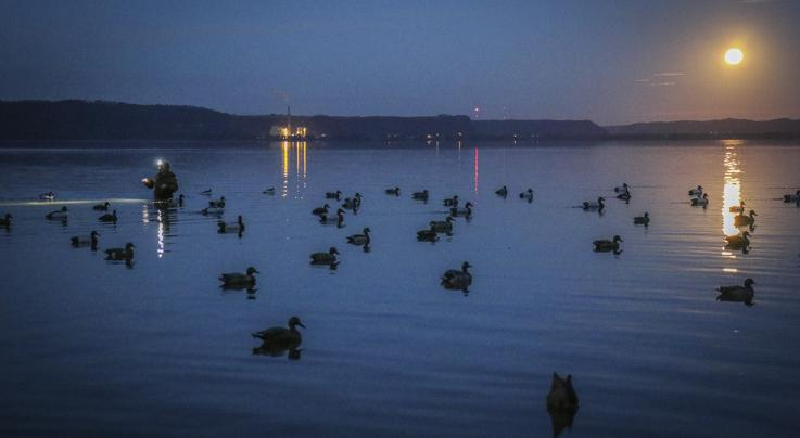 Duck Hunting Sojourn: Can Fans Under the Supermoon Preview Image