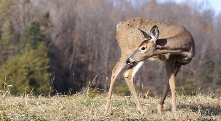 Is That Head-Bobbing Deer Trying to Get You to Move? Maybe. Preview Image