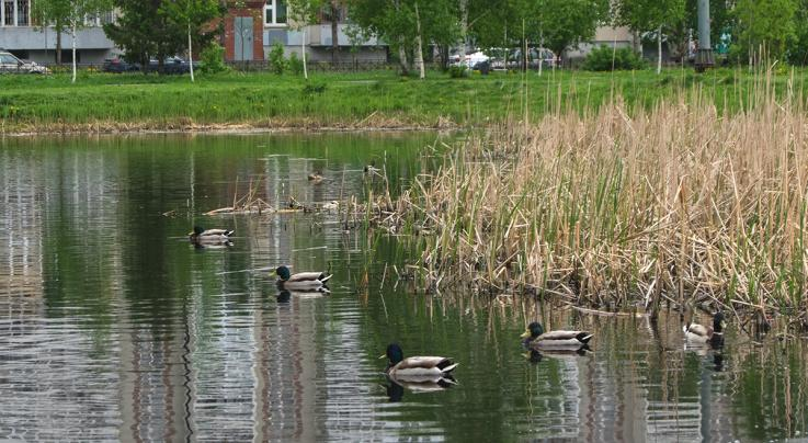 7 Ducks You Don't Want to Hunt This Season Preview Image