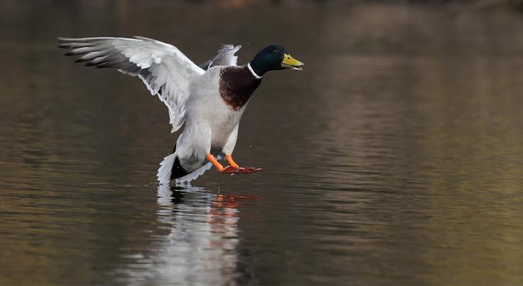 Sneakers: 6 Flying Ducks That Will Fool You Preview Image