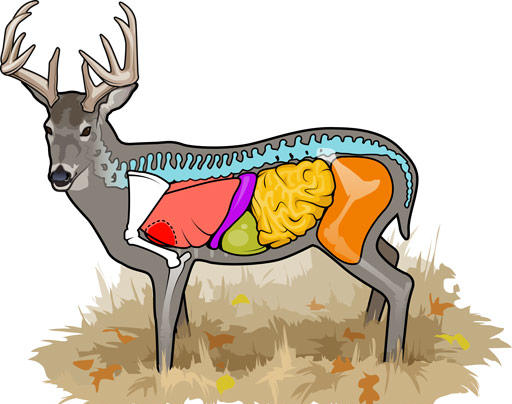 You Shot a Deer. Here's How to Find It. Preview Image