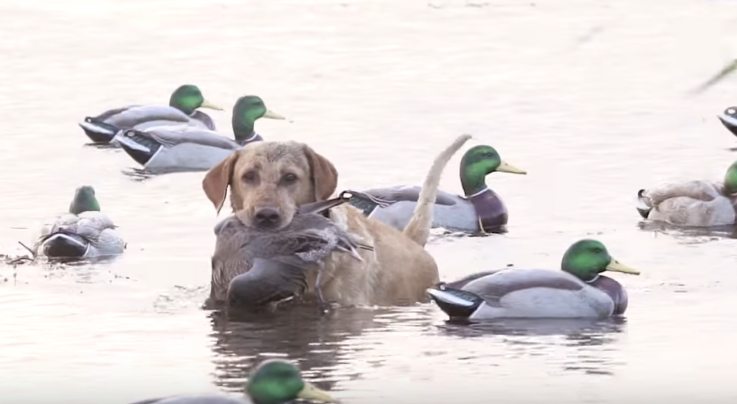 The X: Duck Hunting Opening Day Preview Image