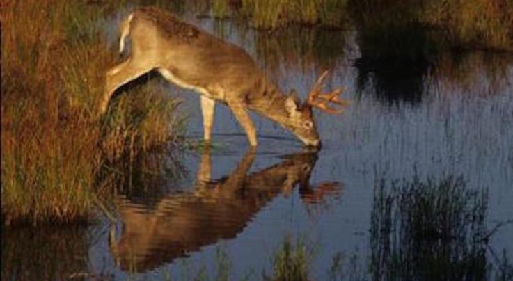 Deer Hunting: Monster Buck Reflections Preview Image