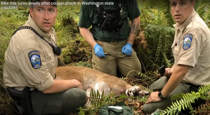Cougar Kills Mountain Biker Preview Image