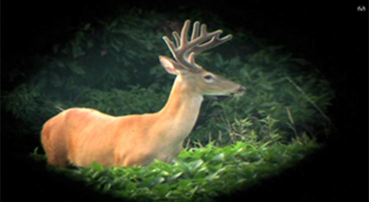 How to Provide More Deer Forage Without Planting Food Plots Preview Image