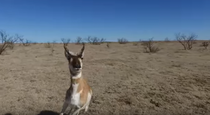 Pronghorn Takes Down Drone Preview Image