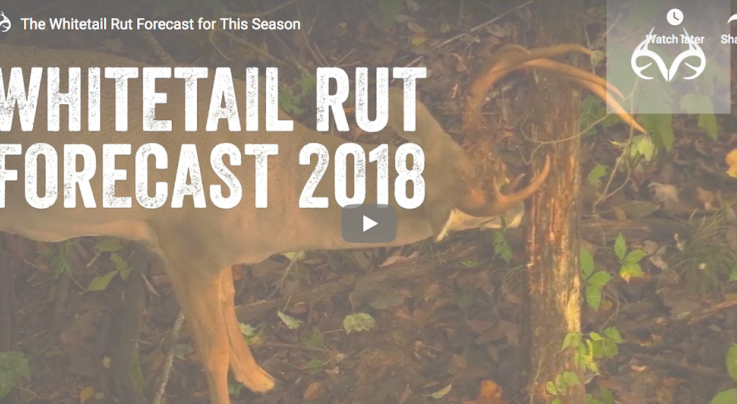 The 2018 Whitetail Deer Rut Forecast Preview Image