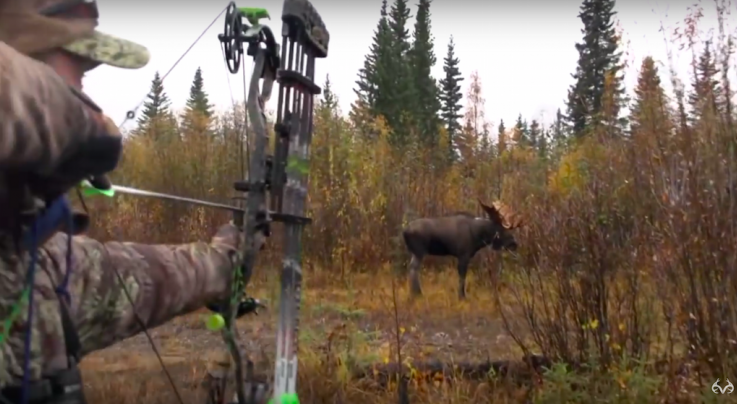 Huge Bull Moose Charges Bone Collector Nick Mundt Preview Image